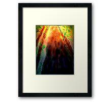 DEEP WOODS Framed Print