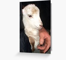 Little Baby Frankie Greeting Card