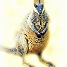 Little Wallaby by Evita