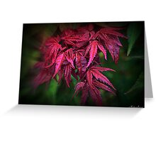 Autumn Colours - Maple  Greeting Card