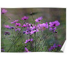 Autumn Colours - Purple Windflowers Poster