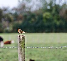 Robin by JEZ22