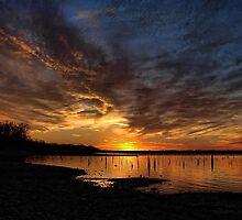 A Lake Full Of Stumps by Carolyn  Fletcher