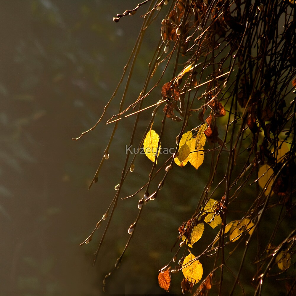 Yellow Leaves On A Misty Autumn Day by Kuzeytac