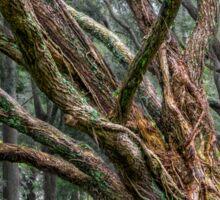 Mysterious tree Sticker