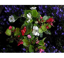 colourful flowers with comic effect Photographic Print