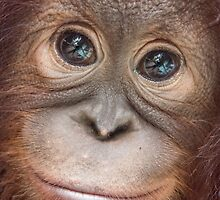 Michele by Orangutans
