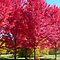 Reds fo Autumn