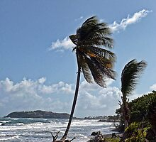 Strong Breeze by globeboater