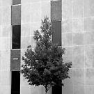 Urban Tree#2 by © Joe  Beasley IPA