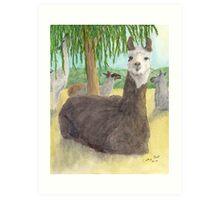 Llamas Lounging Farm Animal Pets Art Cathy Peek Art Print