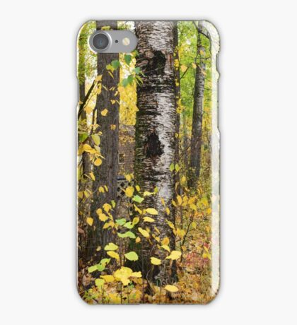 Scarred tree iPhone Case/Skin