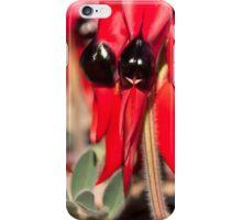 Sturt Desert Pea iPhone Case/Skin