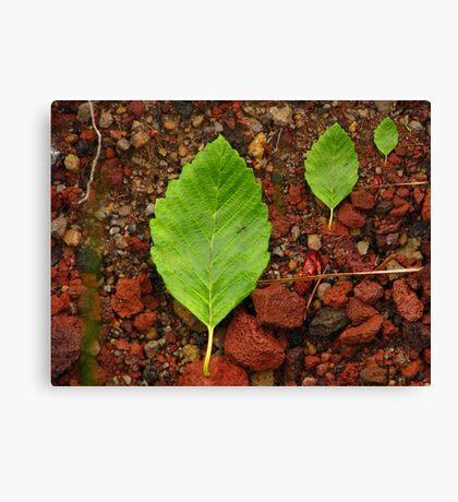 Small, Medium, Large-For John Forrant Canvas Print