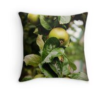 Apples Anyone? Throw Pillow
