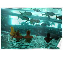 Sharks and Baby in Pool Poster