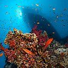 Divers Heaven by Norbert Probst
