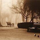 Foggy park  by JohnDonica