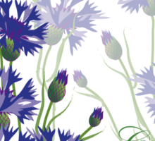 blue meadow cornflower design Sticker