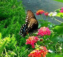 Butterfly by smartartsco