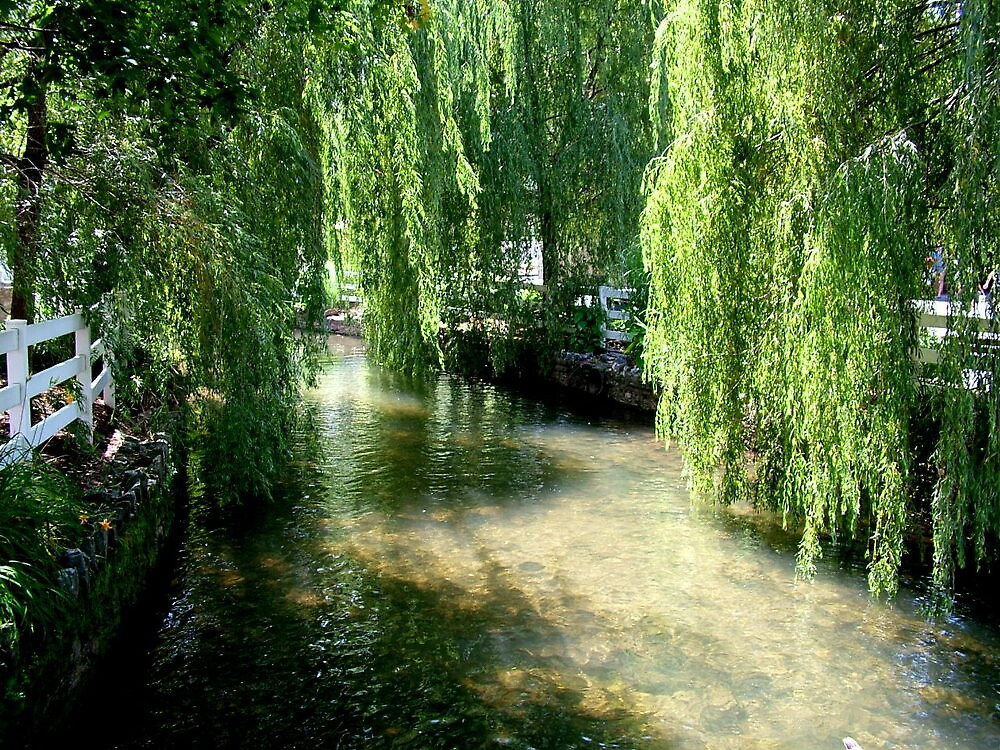 Willow Trees by smartartsco