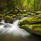 Great Smoky Mountains Gatlinburg TN Roaring Fork - Gift of Life by Dave Allen
