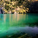 Fish In A Pond - Plitvice National Park Croatia by Graeme Buckland