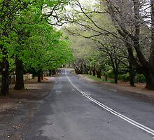 THE AVENUE, MOUNT WILSON,  NSW. by Phil Woodman