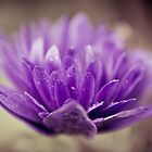 Flowerscapes - Purple Flower by lesslinear