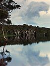 Lake Ainsworth, early morning No. 2 by Odille Esmonde-Morgan