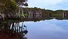 Lake Ainsworth, early morning, No 3 by Odille Esmonde-Morgan