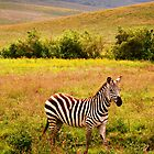 Won't Back Down ( Baby Zebra in the Wilderness ) by emiliewho