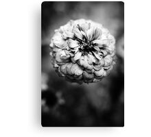 Fall Decay Canvas Print