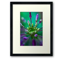 Got tired of waiting for fireworks so went and found my own.  Framed Print