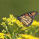 Autumn Monarch 2 by Gregg Williams