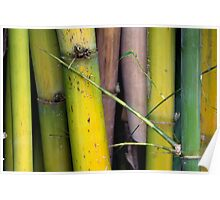 Green Bamboo  Poster