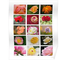 Flower Collage on White Poster