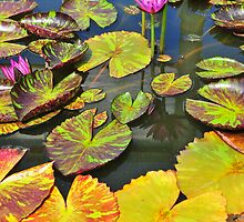 Water lilies by Ulo Pukk