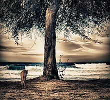 the cat and the sea by stelio