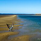 Hervey Bay by Julia Harwood