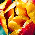 Flowerscapes - Tulip Detail by lesslinear