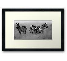 Masai Mara Zebra Framed Print