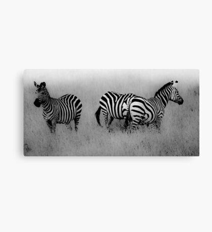 Masai Mara Zebra Canvas Print