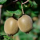 Actinidia sinensis fruits by DebbyScott