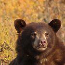 Nice Bear by Alex Call
