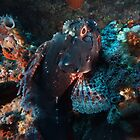 black scorpionfish by peterbeaton