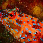 popart harlequin fish by peterbeaton