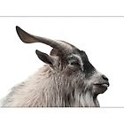 The curious case of Billy the Goat by Clive  Wilson