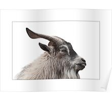 The curious case of Billy the Goat Poster