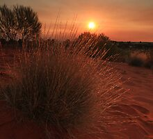 Outback Sunset by Ursula Rodgers
